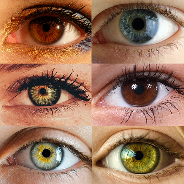eye color trivia florence or siuslaw eye care center